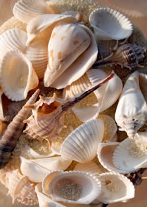 Shell hunting on the Bunbury beach